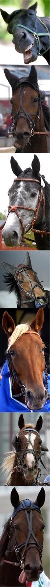 Hästarna - navet i travsporten