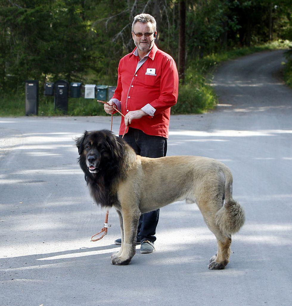 En men ett lejon