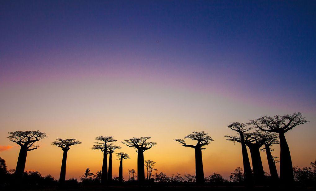 Vem ordnar resor till mocambique